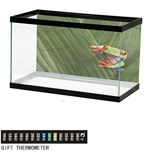 Dress Costa Reef - bybyhome Fish Tank Backdrop Animal,Exotic Frog from Costa Rica,Aquarium Background,60