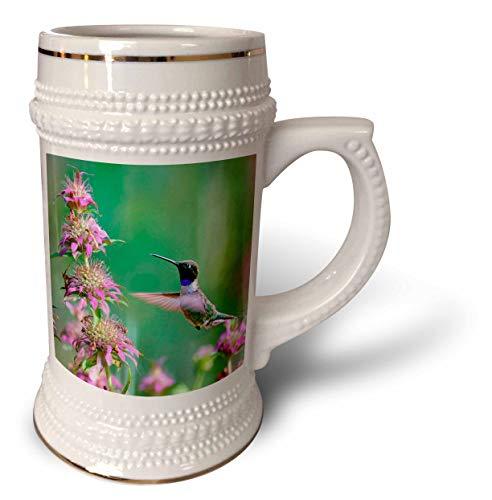 - 3dRose Danita Delimont - Hummingbirds - Black-chinned Hummingbird male at bee balm, Texas, USA.  - 22oz Stein Mug (stn_315064_1)