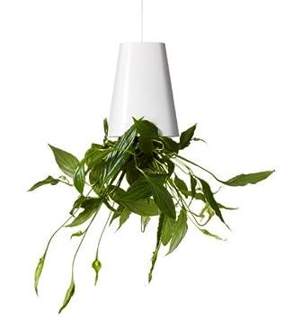 Pot Taille – À Fleurs De L'envers Petite Skyplanter oBrxeWdCQ