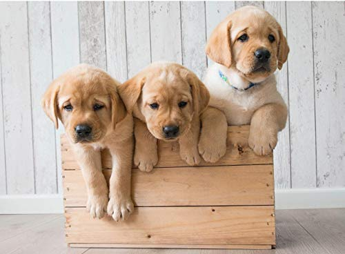 pictures of cute puppies - 5