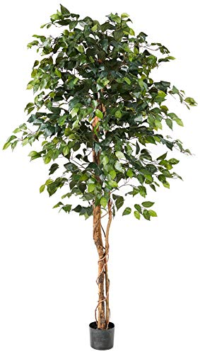Nearly Natural 6ft Ficus Tree, 6', Green
