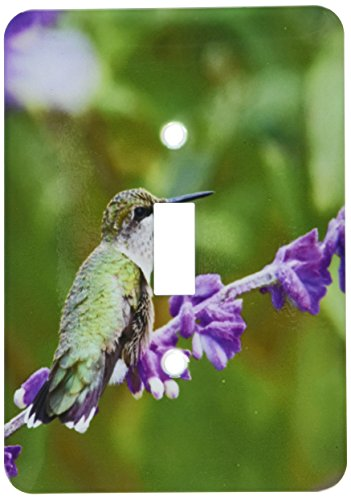 3dRose lsp_207100_1 Ruby-Throated Hummingbird at Mexican Bush Sage, Marion Co Il Single Toggle Switch ()