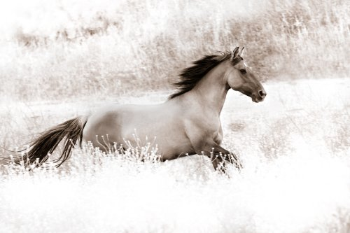 """""""Light Field"""" Mustang by Neal L. Parisi"""