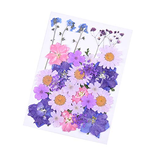 Dried Natural Colorful Pressed Flowers Leaves Petals for Crafts iPhone Case,Candle Soap Making,Purple Pink Flowers 34 Pcs