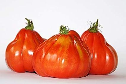 Amazon.com: Tomato