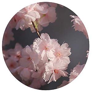 Elibone 180cm Artificial Cherry Blossoms Flower Vines Party Supplies Garland Silk Fake Cherry Flower Rattan Wedding Home Decor C,4 11
