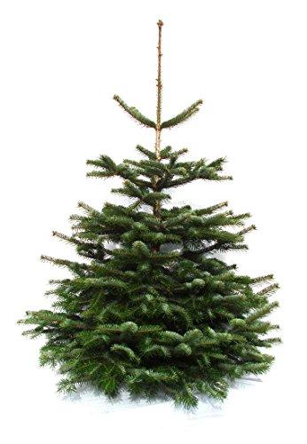 Echter Weihnachtsbaum Nordmanntanne 1 20 Bis 1 40m Aus Dem Sauerland