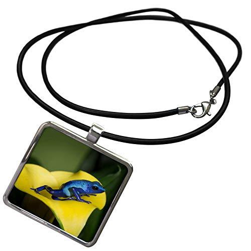3dRose Danita Delimont - Frogs - Blue Poison Dart Frog, Blue Poison Arrow Frog, Dendrobates tinctorius. - Necklace with Rectangle Pendant (ncl_314000_1) ()