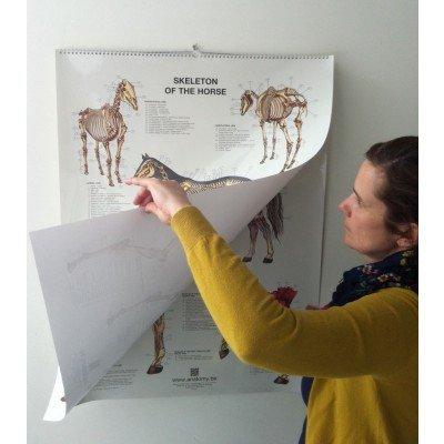 horse chart flipover detailed set of 6 anatomy.be
