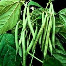 Kentucky Wonder (Bush) Beans - 30 Seeds Great Taste (Bush Kentucky Wonder Beans)