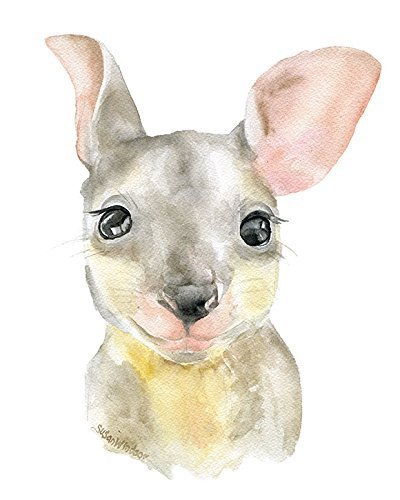 Baby Kangaroo Joey Watercolor Painting Giclee Print