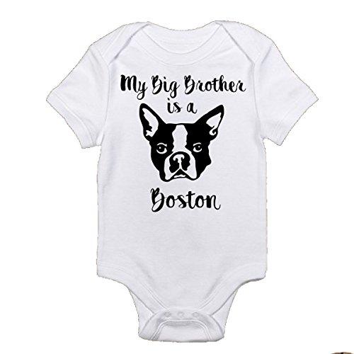 (My Big Brother is a Boston Terrier Funny Onesie Baby Bodysuit Onesie Brand Super Cute Onesies (3-6 Months) White)