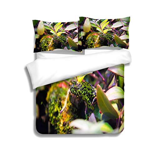MTSJTliangwan Duvet Cover Set Poisonous Tropical Green and Black Spotted Frog 3 Piece Bedding Set with Pillow Shams, Queen/Full, Dark Orange White Teal Coral