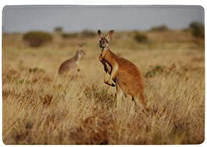 Cute And Funny Close-up Of Kangaroo Blocking Print Passport Holder Cover Case Travel Luggage Passport Wallet Card Holder Made With Leather For Men Women Kids Family