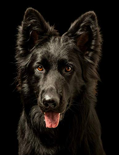 Black-German-Shepherd-Notebook-Notebook-85-x-11-College-Ruled-150-Pages-for-Elementary-Primary-Middle-High-School-or-University
