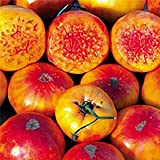 Hillbilly Tomato Seeds (30+ Organic Seeds) - Produces Rare Beautiful & Delicious 1-2lb Heirloom Fruits - Hillbilly Seeds