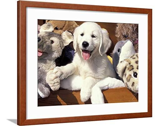 Golden Retriever Puppy Framed - ArtEdge Golden Retriever Puppy Toys Lynn M. Stone, Brown Framed Matted Wall Art Print, 18x24 in
