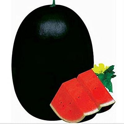 NBANNB Egrow 30Pcs Giant Watermelon Seeds Black Tyrant King Super Sweet Watermelon Seeds Garden Fruit : Garden & Outdoor