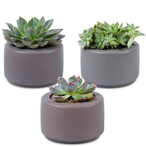 (Unibene 3.5 Inch Ceramic Contemporary Cylinder Cactus Succulents Pots with Drainage Hole, Indoor Bonsai Planters Containers, Decor for Home Office Garden Kitchen - 3 Pack )
