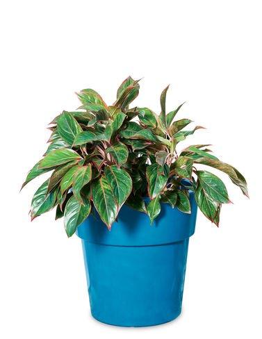 Sonoma Planter (Sonoma Self-Watering Planter, Large)