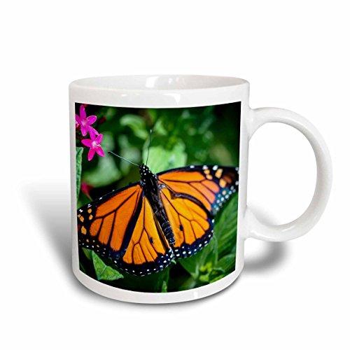 3dRose mug_211606_1