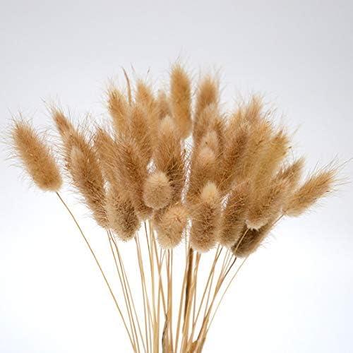 SODIAL Queue de Lapin Fleur S/éch/ée de 20 Tiges Plantes Naturelles Bouquet DHerbes de Lapin Florales Photo Accessoires de D/écoration pour La Maison
