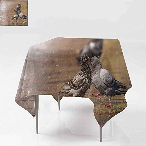 AFGG Anti-Fading Tablecloths,Male Pigeon displays and Struts After a Female in The City wi,for Events Party Restaurant Dining Table Cover,54x54 Inch th -