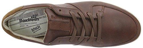 de hombre Cladd White deporte Zapatillas Chocolate de para cuero Boxfresh w6dnAUqxX