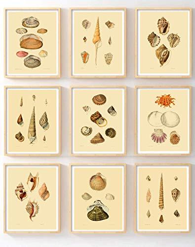 (Ink Inc. Vintage Sea Shell Beach Ocean Wall Art Prints Posters Set of 9)