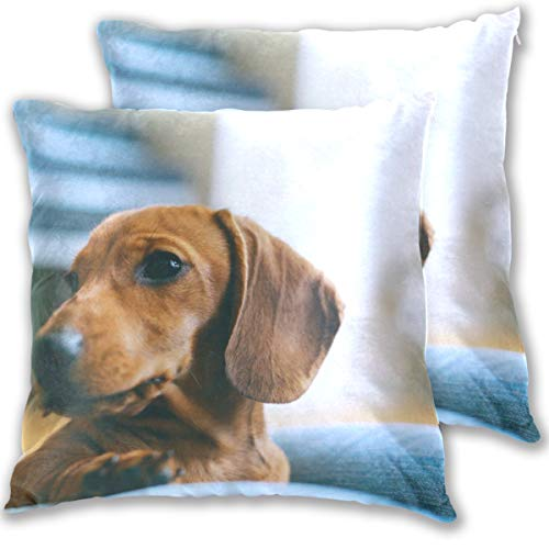 Cute Dachshund Dog Throw Pillow Cover, Cotton Square Home Decor Pillowcases for Sofa Bedroom Car, Set of 2 - Dachshund Cute