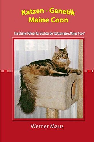 Katzen-Genetik Maine-Coon