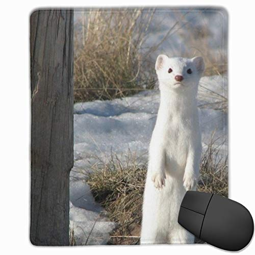 Mouse Pad, Ferret Printing Mouse Mat with Stitched Edges,Smooth Surface and Non-Slip Rubber Base for Laptop,Computer & PC,Large Mouse Mat - 8.6