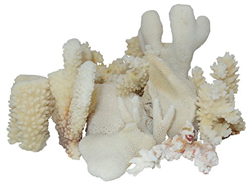 U.S. Shell White Coral Assorted Pieces ()