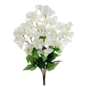 "24"" Bougainvillea Bush X 7 Cream White (pack of 12) 2"