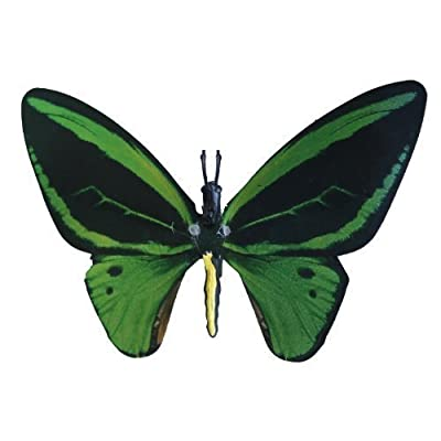 Dynalloy, Inc Aliforms Birdwing Moving Butterfly: Toys & Games