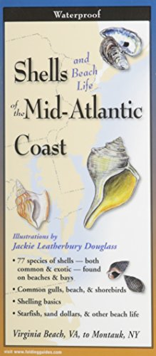 Which are the best shells of the mid-atlantic coast available in 2020?