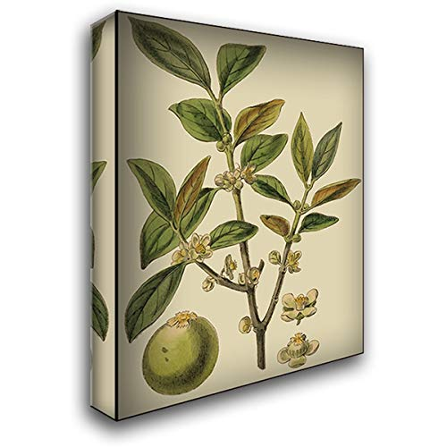 Fitch Leaves on Khaki I (PS) 28x36 Gallery Wrapped Stretched Canvas Art by Fitch, J.N.