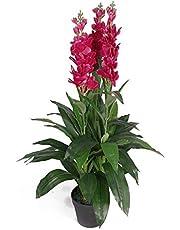Leaf Planta de orquídea Artificial de 100 cm, Extra Grande en Maceta de plástico Negro, Rosa Oscuro