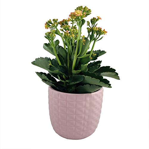 Better-way Pink Round Embossed Ceramic Planter Modern Flower Pot Succulent Plant Container Indoor Pots Gift for New Year