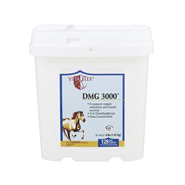 Vita Flex DMG 3000 Concentrate, 128 Day Supply, 4 lbs 1