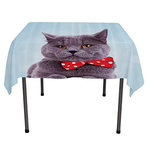 - Cat Decor, Tablecloth Dust-Proof Table Cover Tuxedo Gray Scottish Fold Theme with Red White Polka Dots Tie Bow Baby Blue Fun, for Dining Room, 36x36 Inch Sky Blue Dimgrey
