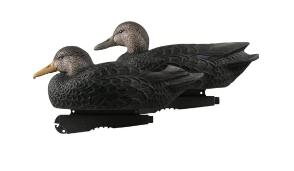 Black bottom duck hunting