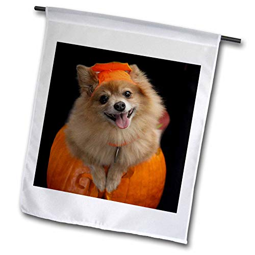 3dRose Sandy Mertens Halloween Designs - Happy Pomeranian Dog on Jack o Lantern Halloween, 3drsmm - 12 x 18 inch Garden Flag (fl_290230_1) ()