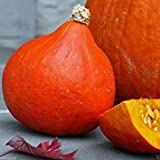 Red Kuri Squash Seeds- Open-Pollinated,Japanese kabocha Pumpkin,Organic Non-GMO (25 seeds)