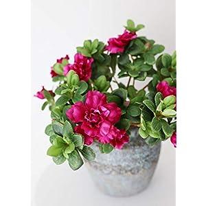 "Floral Home Fuchsia Silk Azalea Bush - 12"" Tall - Set of 2 36"