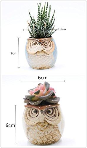 Review Weierken Mini 6PCS Owl