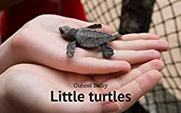 Little Turtles: Cutest Baby Little Turtles