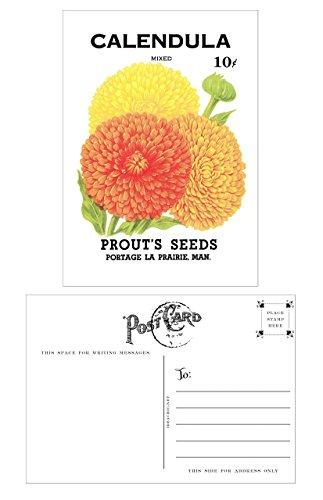 Vintage Seed Packet Postcards - 12 (Seed Packet Postcards)