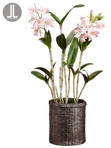 シルク植物Direct Star Cattleya Orchid (パックof 1 ) B071VM6ND3