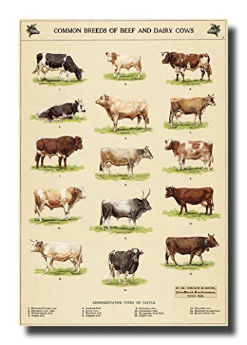 Common Breeds of Beef and Dairy Cows Canvas Wall Art Beautiful Picture Prints Living Room Bedroom Home Decor Decorations UnStretched and No Framed -